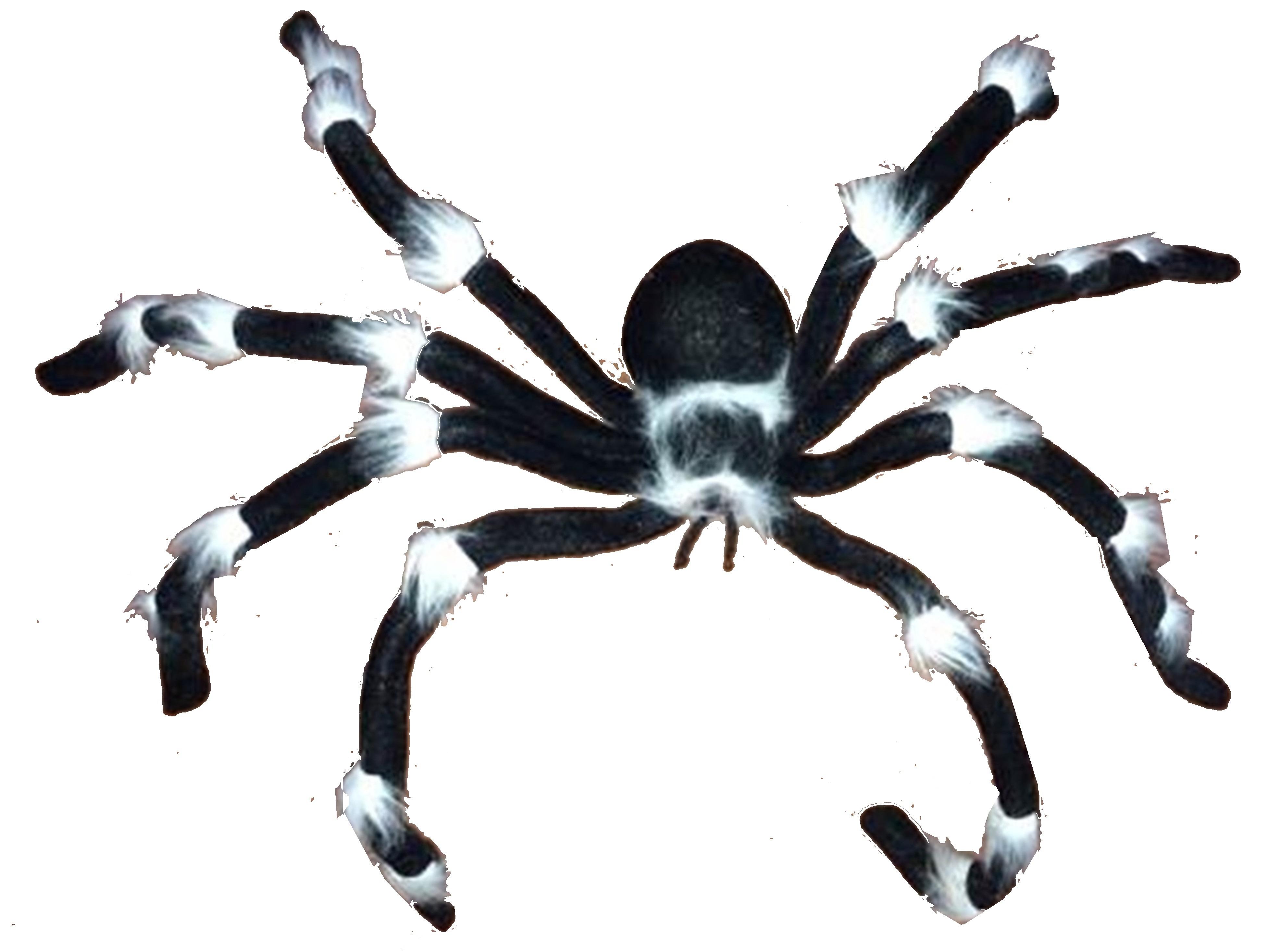 Black&white spider